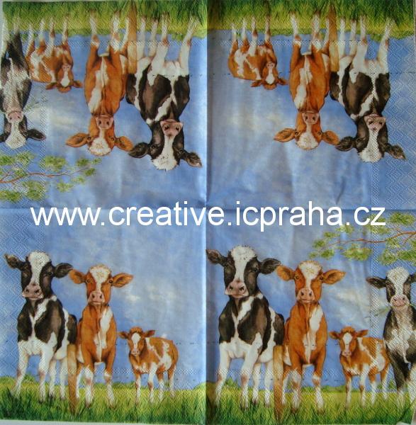 krávy na louce AMB5110