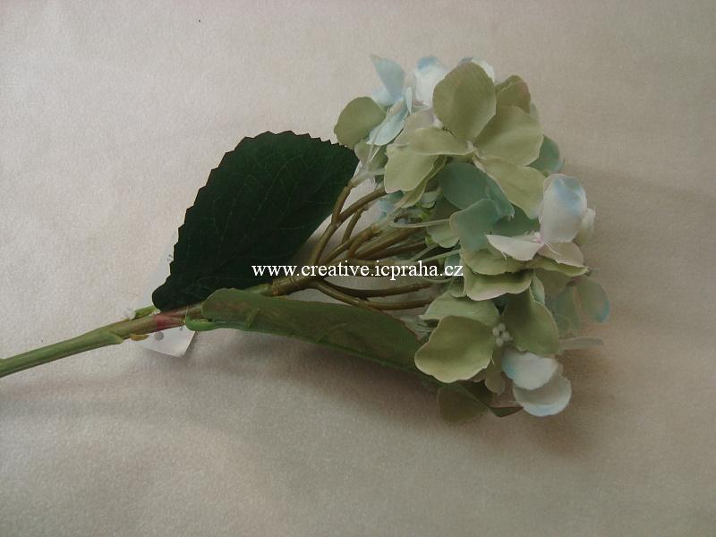 hortenzie - květ bílozelený