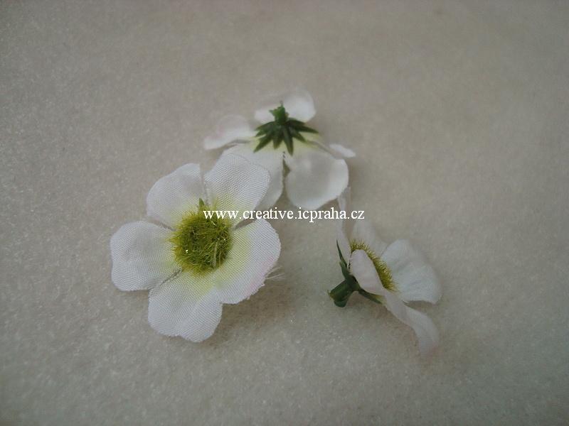 květ čemeřice 3cm