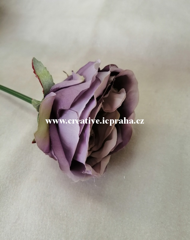 růže fial/modrá