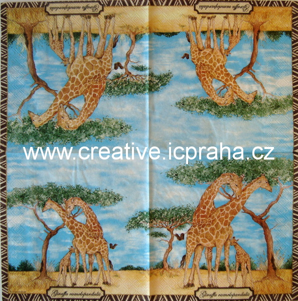 safari - žirafí rodina  AMB 4915