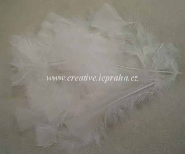 barev.peří bílé 10-17cm cca25ks