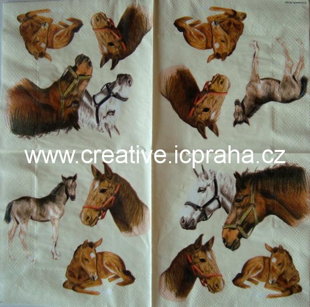 Koně a hříbata  AMB
