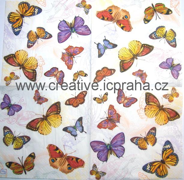 motýli DAISY