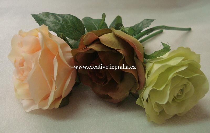 růže vintage