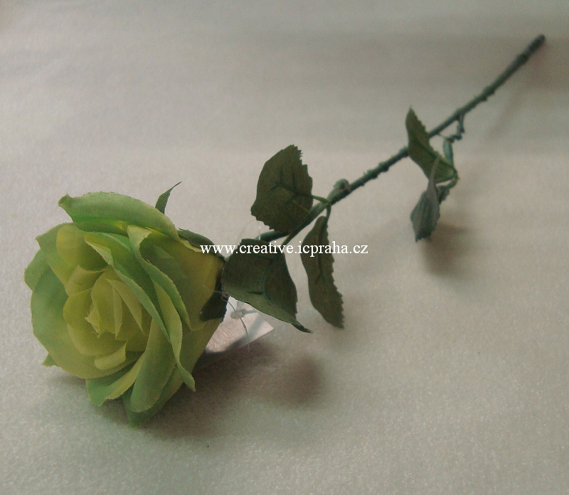 růže poupě
